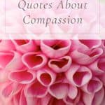 23 Heart-Warming Quotes About Compassion