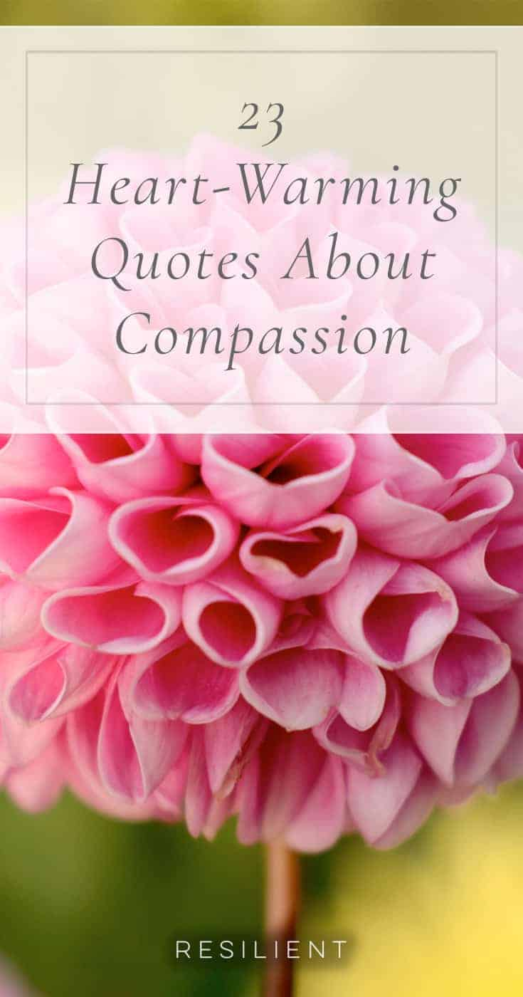 23 heart warming quotes about compassion resilient compassion is the thread that connects humans to each other here are 23 heart izmirmasajfo