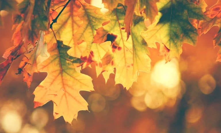 Quotes About Fall | Autumn Quotes