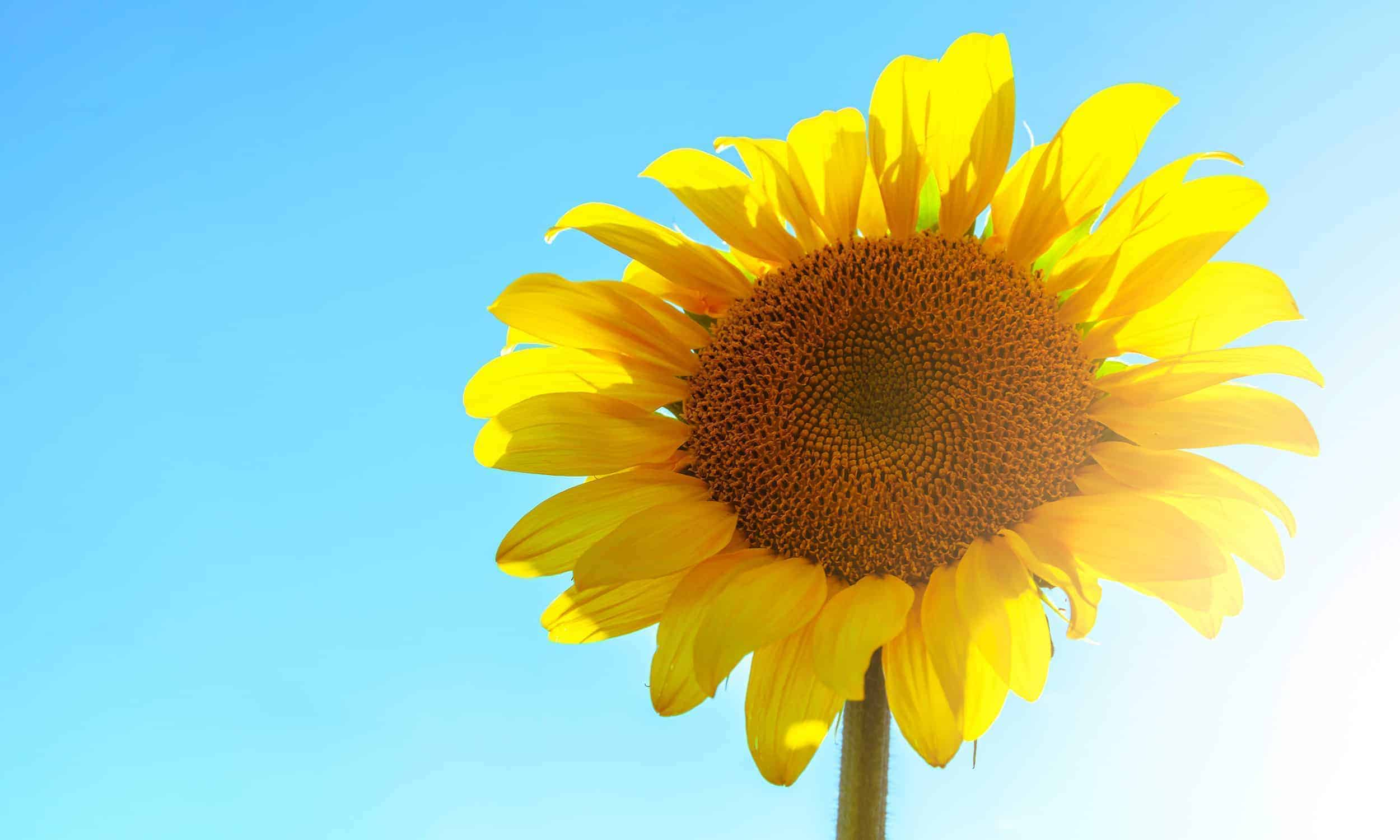 Sun Quotes   Sunshine Quotes   Quotes About the Sun