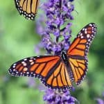 40+ Butterfly Quotes and Sayings to Float Away On