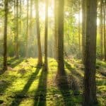 20+ Quotes About Trees and Forests
