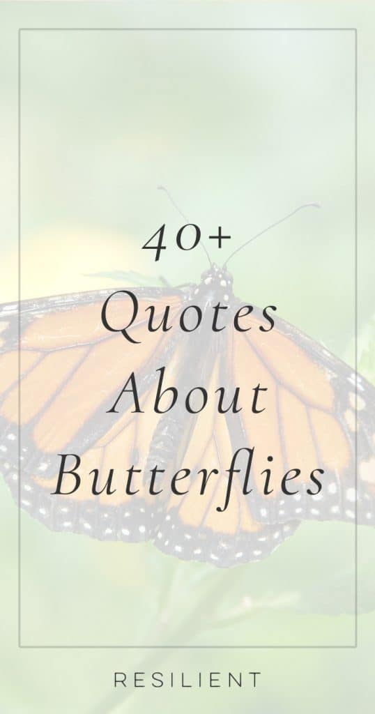 Quotes About Butterflies | Butterfly Quotes