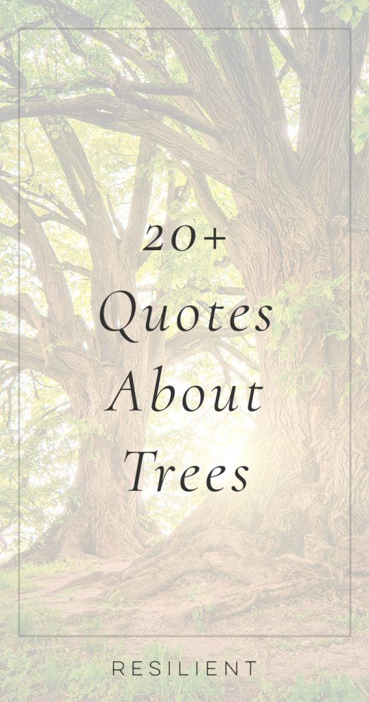 Quotes About Trees and Forests | Tree Quotes